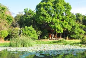 Damba Tree house 1
