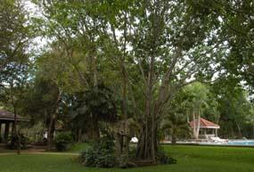 arboretum 01 128