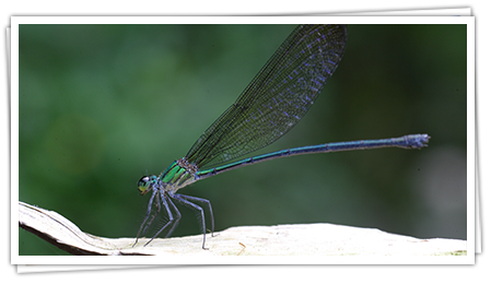 dragonfly-img