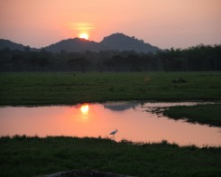 Sunset in Minneriya