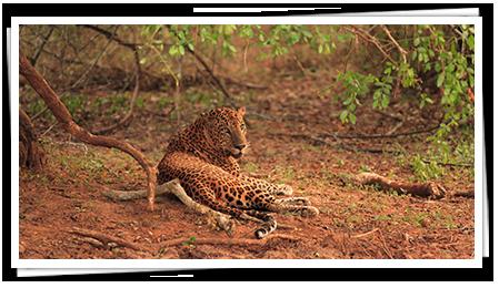 Leopard Trails, Sri Lanka