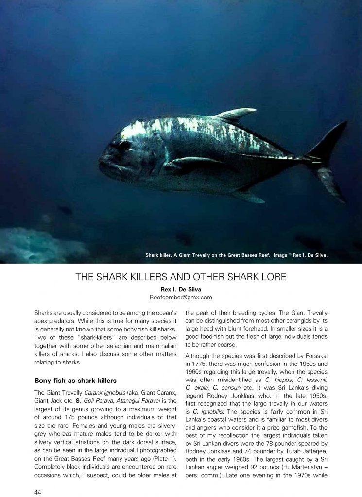 the-shark-killers-loris_vol28_27-6-16-copy-2-2-1