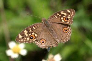 Wild life Butterfly