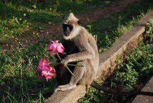 Wild life Monkeys