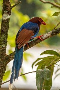 Wild Life Bird