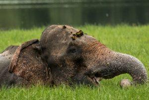 Wild life Elephant
