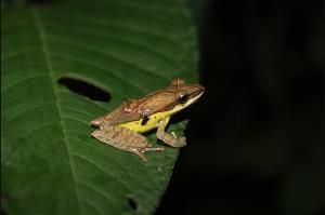 wild life frogs